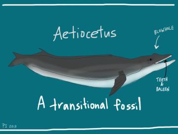 Ancient_Whale-1024x768
